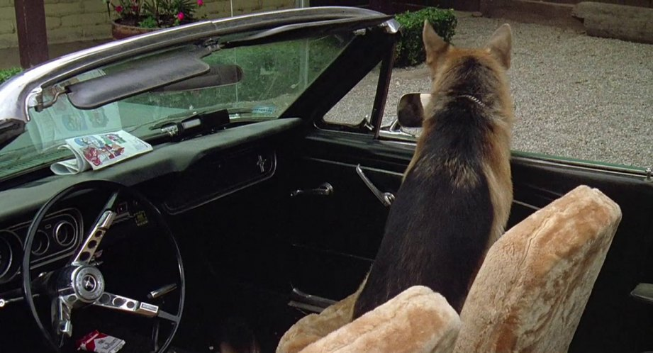 1966 Ford Mustang, K9 + 1989